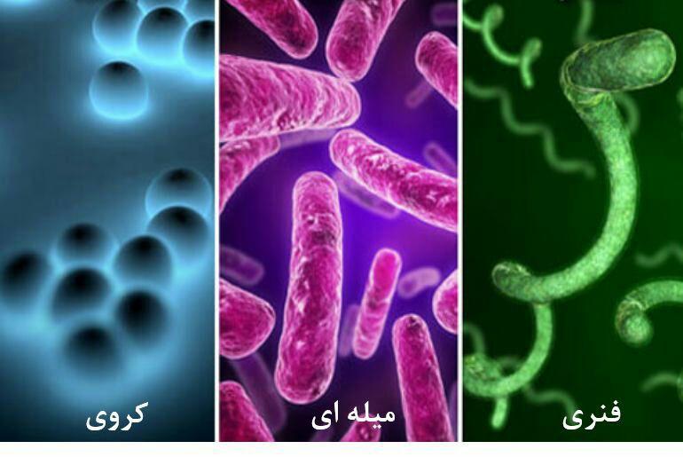 دسته باکتری ها