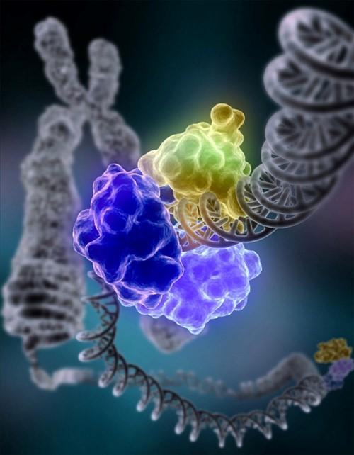 DNA لیگاز در حال ترمیم آسیب DNA کروموزومی