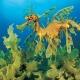 اژدهای دریایی برگدار ( Leafy Sea Dragon ) در جزایر غرب و جنوب استرالیا یافت شده است.