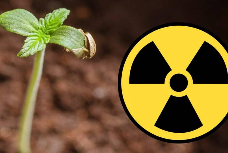 خاک های آلوده با بکارگیری ارگانیسم ها قابلیت سمزدایی دارند.