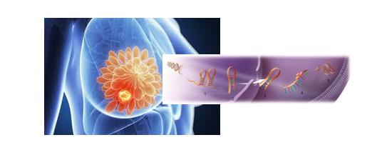 بررسی اثرات نوعی micro RNAدر بافتهای توموری پستان