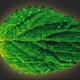 تولید برگ مصنوعی که کربن را به سوخت تبدیل میکند